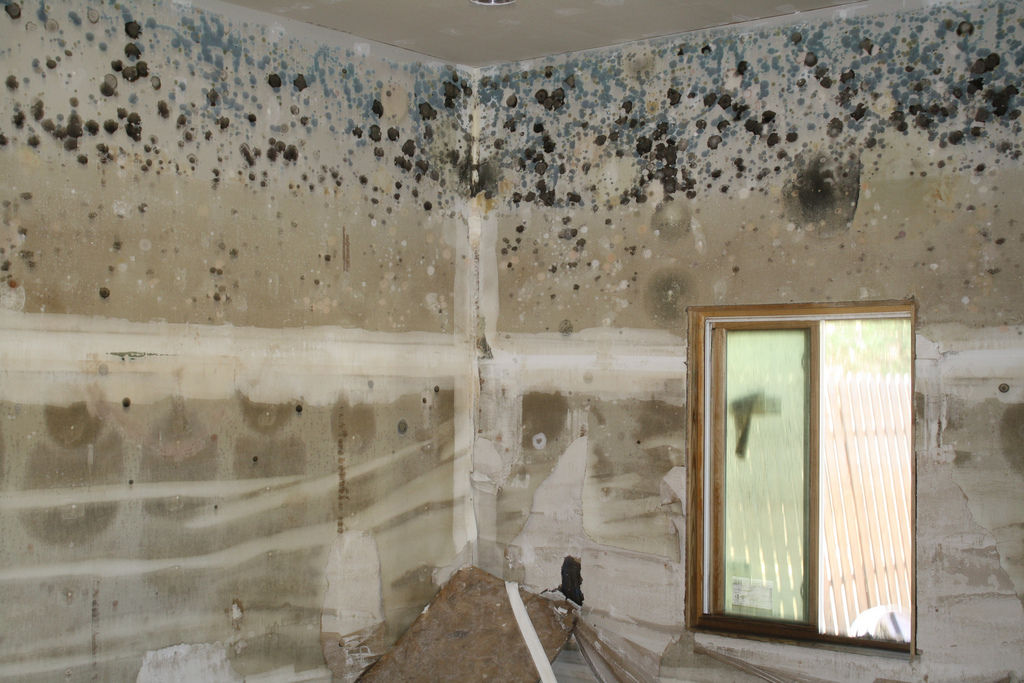 An extremely moldy room